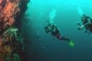 Diving around Bohol