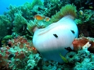 Diving Around Panglao_1