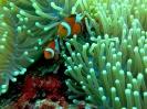 Diving Around Panglao_3