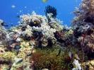 Diving Around Panglao_5